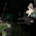 OwlsShouldPrey-121415