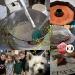 decdaily_day3_1232010_pg2privacycopy_resize