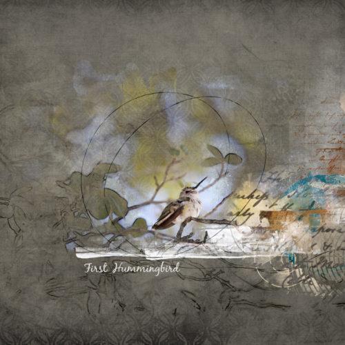 First hummingbird - Bricolage 104 web
