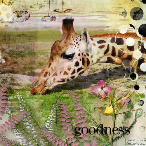 Goodness-Jeannette
